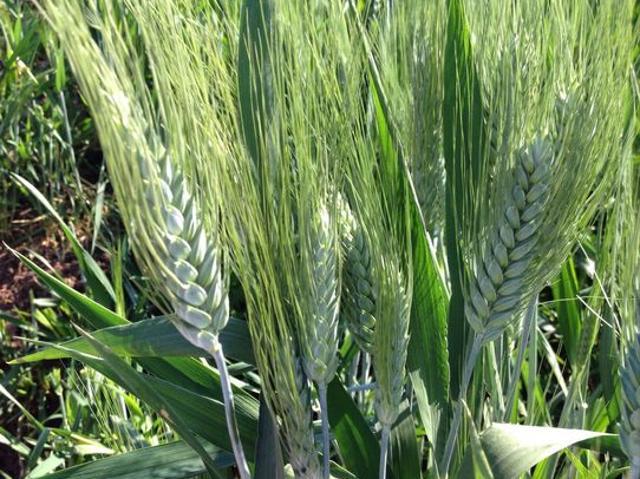 Venta De Terreno Agricola