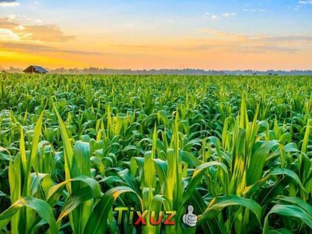 We Offer 90 Acre Agricultural Land Is Available For Sale