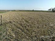 1.42 Hectares 3.5acrs Vacant Allotment 10 Minutes From Dalby No Covenant In Place