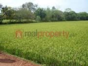 8 Acre Agriculture Land In Hafizabad