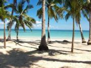 Beautiful White Sandy Beach Lot With Bungalow For Rush Sale